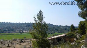 Vendemos Finca de olivos y almendros en Calaceite con secano por 85.000€