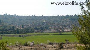 Vendemos Finca de olivos y almendros en Calaceite con olivos