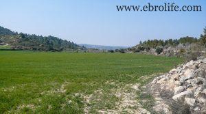 Finca de olivos y almendros en Calaceite en venta con río por 85.000€