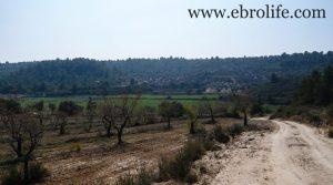Se vende Finca de olivos y almendros en Calaceite con olivos