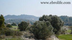 Finca de olivos y almendros en Calaceite para vender con secano