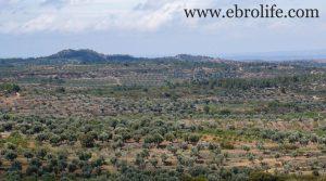 Casa rural en Calaceite a buen precio con terraza