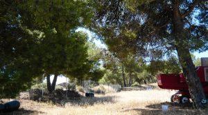 Vendemos Finca de recreo en Calaceite con pinares por 70.000€