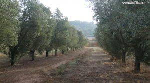 Finca rústica Barranco de los Huertos Calaceite para vender con pinares