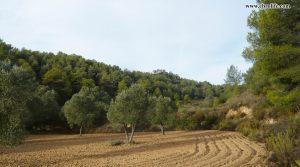 Finca rústica Barranco de los Huertos Calaceite a buen precio con masía