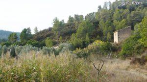 Finca rústica Barranco de los Huertos Calaceite en oferta con olivos por 50.000€