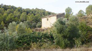 Finca rústica Barranco de los Huertos Calaceite para vender con olivos por 50.000€