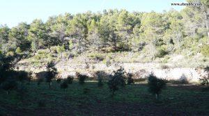 Vendemos Finca rústica Punta Molinera Ráfales con zona setas por 57.000€