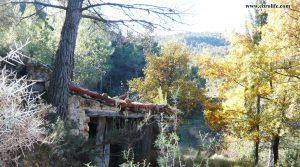 Vendemos Finca rústica Punta Molinera Ráfales con finca trufera ecológica por 57.000€