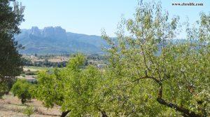 Finca rústica en Horta de Sant Joan a buen precio con almendros