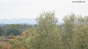 Foto de Finca rústica en Calaceite con olivos por 33.000€