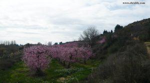 Vendemos Finca rústica en Miraflores Caspe con nectarinas