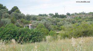 Finca rústica en La Fresneda en oferta con olivos