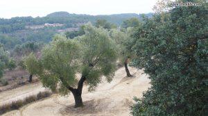 Foto de Finca rústica cerca de Calaceite en venta con masía por 27.000€