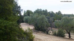 Finca rústica cerca de Calaceite en oferta con olivos