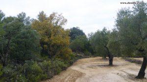 Se vende Finca rústica cerca de Calaceite con olivos