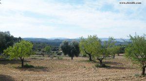 Detalle de Finca rústica de olivos en Valdealgorfa con almendros por 36.000€