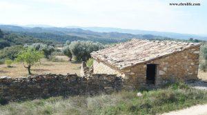 Detalle de Finca rústica de olivos en Valdealgorfa con masía por 36.000€