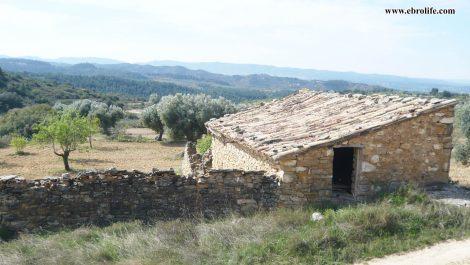 Finca rústica de olivos en Valdealgorfa