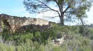 Finca rústica en Maella a buen precio con pinares por 31.000€