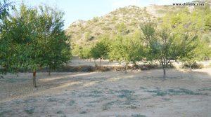 Finca rústica en Calaceite en oferta con pinares