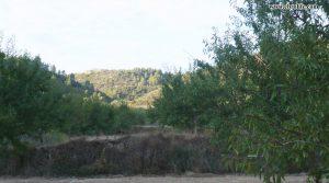 Foto de Finca rústica en Calaceite en venta con pinares