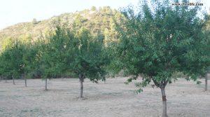 Finca rústica en Calaceite para vender con almendros por 42.000€