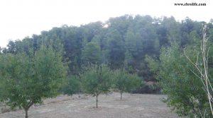 Finca rústica en Calaceite en oferta con pinares por 42.000€