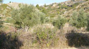 Finca rústica en Calaceite para vender con pinares por 42.000€