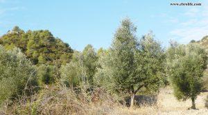 Se vende Finca rústica en Calaceite con pinares por 42.000€