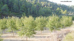 Detalle de Finca rústica en Calaceite con pinares por 42.000€