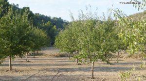 Finca rústica en Calaceite para vender con pinares