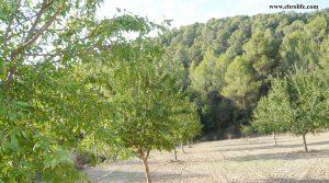 Finca rústica en Calaceite a buen precio con pinares