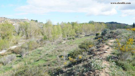 Finca rústica de regadío en Castellseras