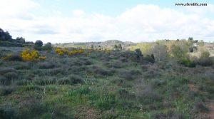 Foto de Finca rústica de regadío en Castellseras con regadío por 39.000€