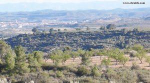 Finca rústica en Fabara para vender con olivos