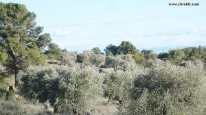 Vendemos Finca rústica en Fabara con pinares por 19.000€
