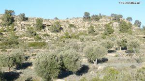 Detalle de Finca rústica en Fabara con pinares