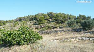 Detalle de Finca rústica de regadio en Villalba dels Arcs con viñedos