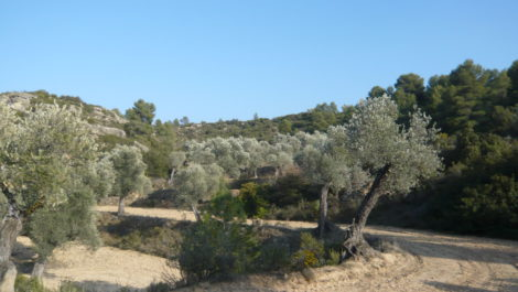 Finca rústica de olivos centenarios en Calaceite