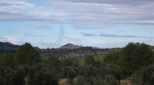 Foto de Olivar en Arens de Lledó con olivos centenarios