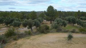 Olivar en Arens de Lledó para vender con olivos centenarios