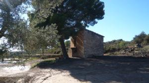Vendemos Olivar en Calaceite con masía típica tradicional con buen acceso por 60.000€