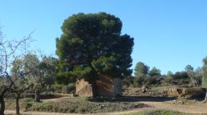 Foto de Olivar en Calaceite con masía típica tradicional con buen acceso