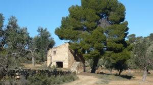 Olivar en Calaceite con masía típica tradicional a buen precio con buen acceso