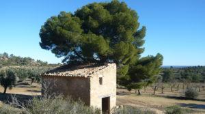 Olivar en Calaceite con masía típica tradicional a buen precio con lugar tranquilo