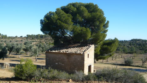 Olivar en Calaceite con masía típica tradicional