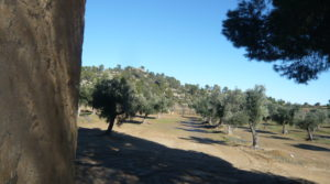 Olivar en Calaceite con masía típica tradicional en oferta con lugar tranquilo por 60.000€