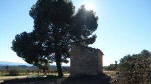 Olivar en Calaceite con masía típica tradicional en oferta con olivos y almendros por 60.000€