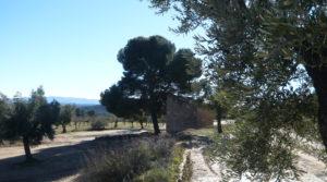 Vendemos Olivar en Calaceite con masía típica tradicional con olivos y almendros